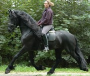 we have good home trained black horse for sale cheap